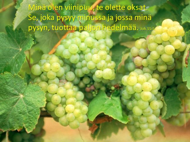 viinirypaleita