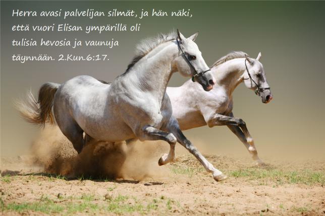 hevospari