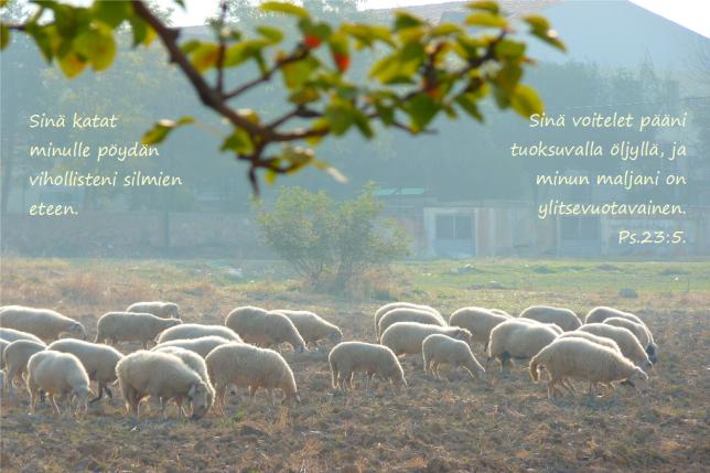 lammaskatras